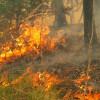 23июня вЗабайкалье зарегистрировано 17 лесных пожаров площадью 635 гектаров