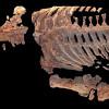 В РФ найдены останки старинного морского динозавра