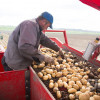 Рекордсменом вПФО попроизводству картофеля стала Нижегородская область