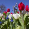 Ограничения не безумно отразились наэкспорте голландских цветов в Российскую Федерацию — специалист