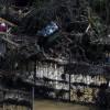 Кстроительству нового зоопарка вТбилиси приступят весной следующего года