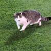 КДК оштрафовал «Зенит» запоявление наполе кошки