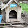 Клей помогал волгоградцу выдавать обыденных щенков запородистых