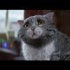 Практически 8 млн просмотров набрал мультфильм озлоключениях кошки