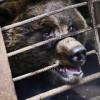 ВДагестане медведь назаправке откусил руку ребёнку