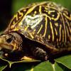 Московскому зоопарку передадут черепах измей 27ноября