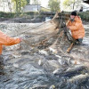 Наподкормку ставропольской рыбы пустят 4 млн руб.
