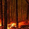 Практически 8 тыс. человек эвакуированы изканадской провинции Саскачеван из-за лесных пожаров