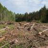 РФ оказалась на1 позиции почислу деревьев наЗемле