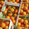 Россельхознадзор запретил ввоз 200 тонн египетских апельсинов