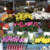 Накарте интернет ресурса открытых данных столицы появятся цветочные магазины