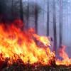 Сотни гектаров леса охвачено огнём вДальневосточном округе