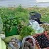 Урожай овощей вПодмосковье может вырасти на18%