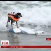 Определен победитель 10-го чемпионата— Собачий серфинг