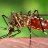 Три случая лихорадки Денге зарегистрированы вАмурской области