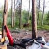 Туристы прогнали медведя незаурядным методом