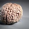 Учёные изобрели способ удалённого влияния наработу мозга