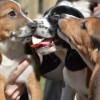 Первые вмире суррогатные щенки родились вСША— Ученые