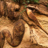 ВБразилии строители отыскали останки неизвестного науке динозавра— Петербургский дневник