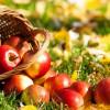 ВБрянске пройдет первый фестиваль еды «Яблочный Спас»