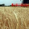 ВОмской области объявили Год плодородия