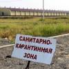 Африканская чума свиней распространилась еще наодин район Саратовской области