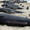 ВСША около берегов Аляски погибли сразу 30 китов