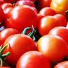 ВВолгограде продолжают дешеветь сезонные фрукты иовощи