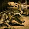 Сибирские вулканы были причиной самого массового вымирания животных в истории Земли