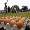 В Стамбуле протестующие турки забросали яйцами генконсульство Нидерландов, перепутав его с российским