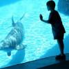 В Нижегородской области построят огромный океанариум