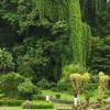 Сад специй и пряностей: ароматная достопримечательность Шри-Ланки
