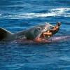 Акулы в Турции есть! Вот только есть ли им до нас дело?..