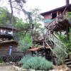 Отель «Дома на деревьях Кадира» переоборудован в лагерь волонтерской организации АКУТ