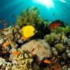 В Турции появится новая забава для туристов — подводная лодка «Немо»