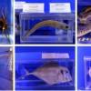 Анталия приглашает в новый морской биологический музей