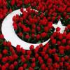 Экзотика Турции: диковинки Стамбула — фестиваль тюльпанов