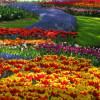 Цветочный туризм способен приносить стране доход