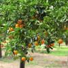 Самая захватывающая экскурсия по Апельсиновой роще в Кемере