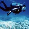 После продолжительной болезни Большой Барьерный риф объявлен мертвым