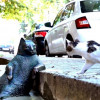 Самому ленивому коту Томбили открыли памятник в Стамбуле
