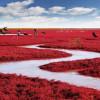 Красный пляж возле города Паньцзинь — осеннее чудо Китая