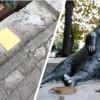 В Стамбуле украден недавно установленный памятник Томбили – известному турецкому коту