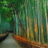 Небольшой Бамбуковый лес Сагано (Япония) — самая живописная и красивая аллея планеты
