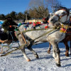 Изюминка зимнего туризма: туры на санях на горнолыжном курорте Cıbıltepe