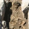 800-летний скелет вырабатывает геном смертельной инфекции