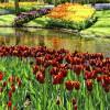 Волшебные сады Амстердама: самый зеленый город в Европе