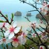 Крым в марте – отдых в изумрудном раю