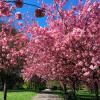 Весенний и цветущий Гринвич-парк в Лондоне должен увидеть не только истинный любитель Англии, но и каждый путешественник