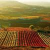 Экскурсии виноградниками на электрокаре: испанцы выводят винный туризм на новый уровень